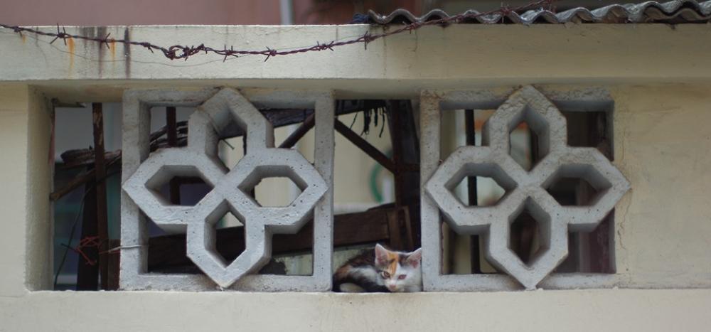 A Homeless Cat