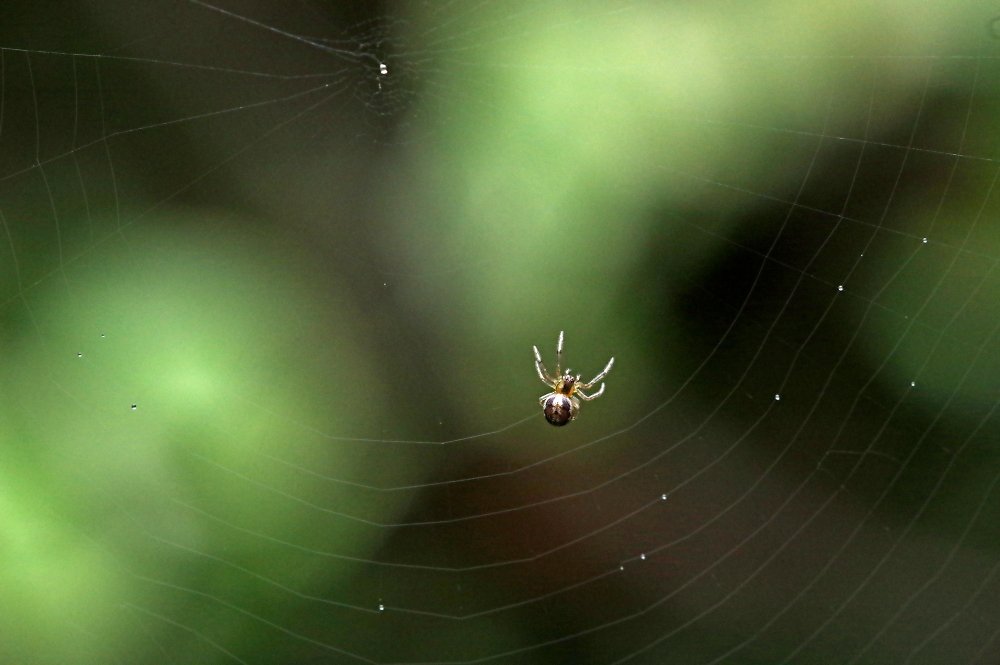 Baby spider making a web