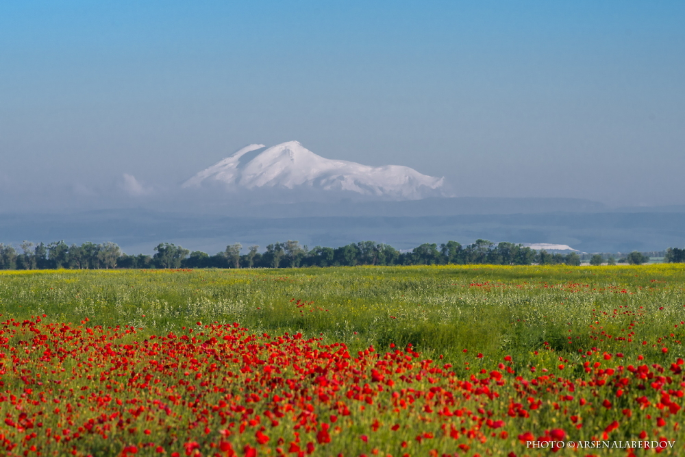 ELBRUS AND POPPIES