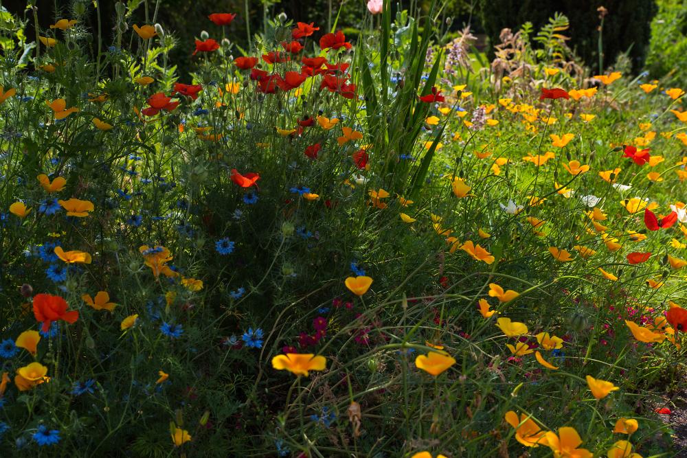 My impressionist garden