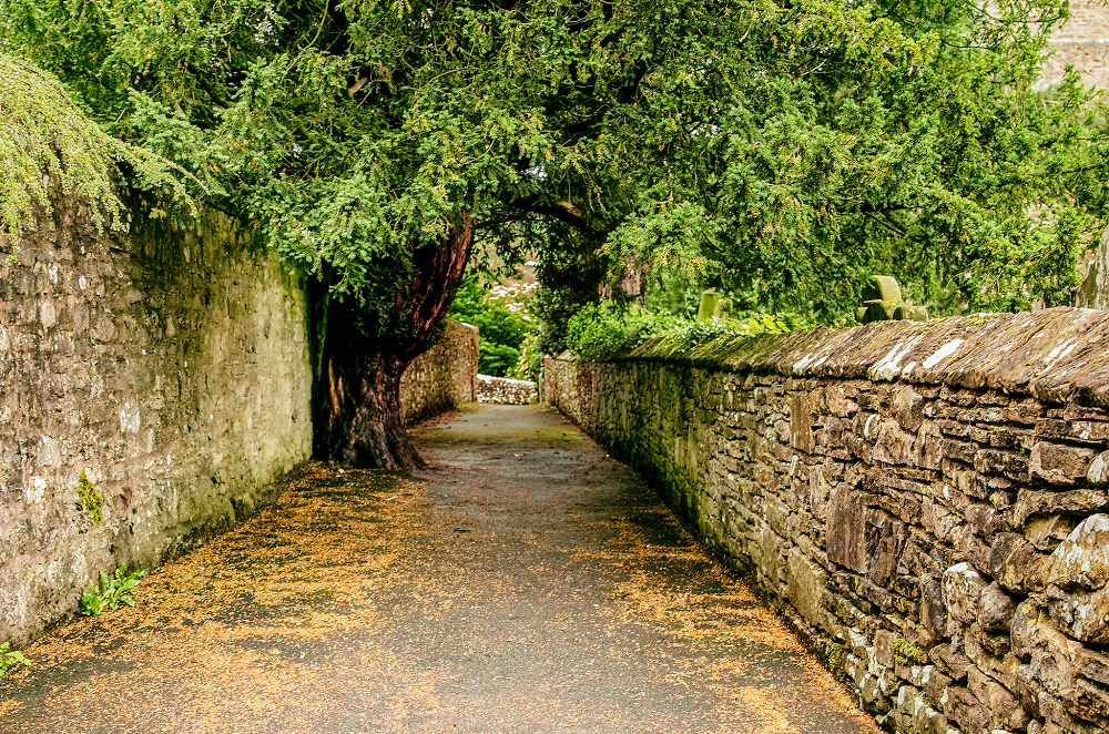The path and Yew
