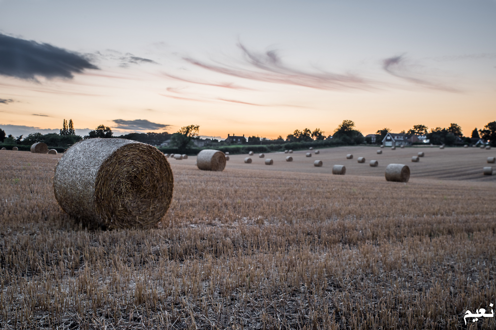 Hay Bales a Sunset