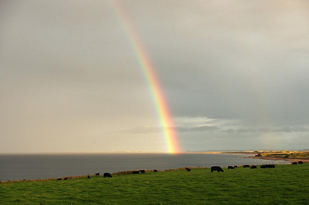 Rainbow over Holy island