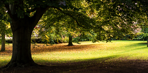 Autumn on the way....