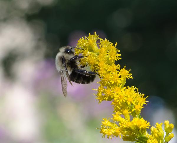 Honey Bee Stocking Up