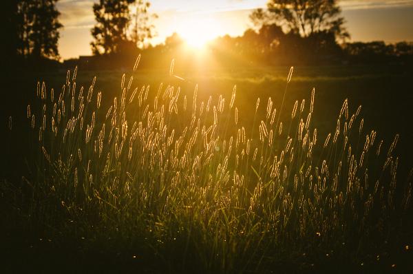 Spring Hints Sunset