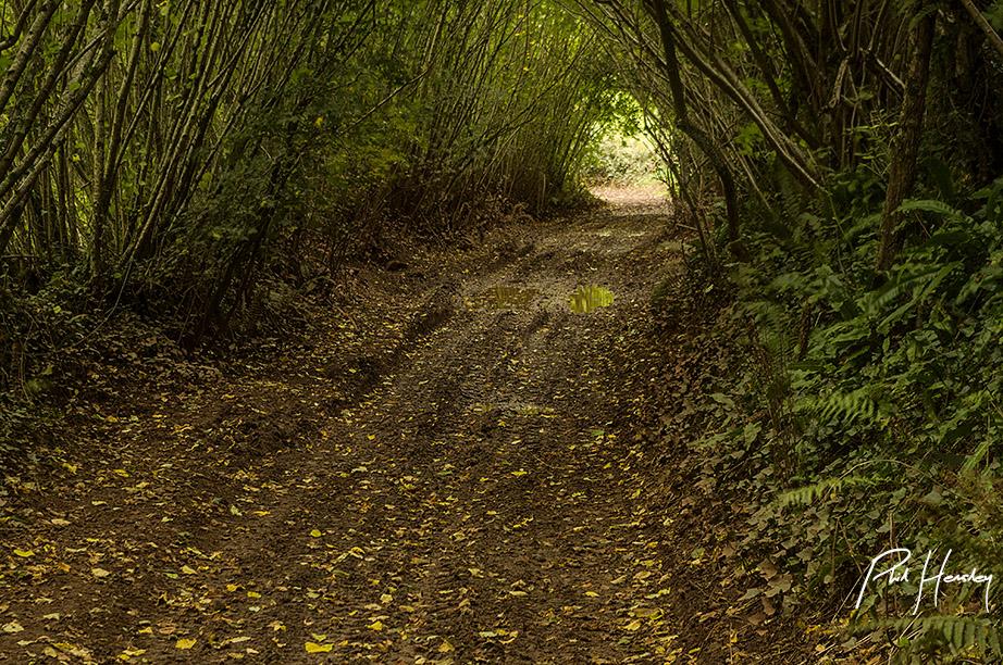 Autumn Portal