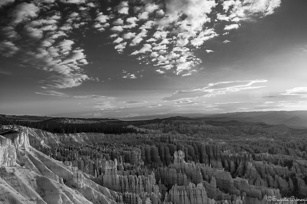 Bryce Canyon in Black & White