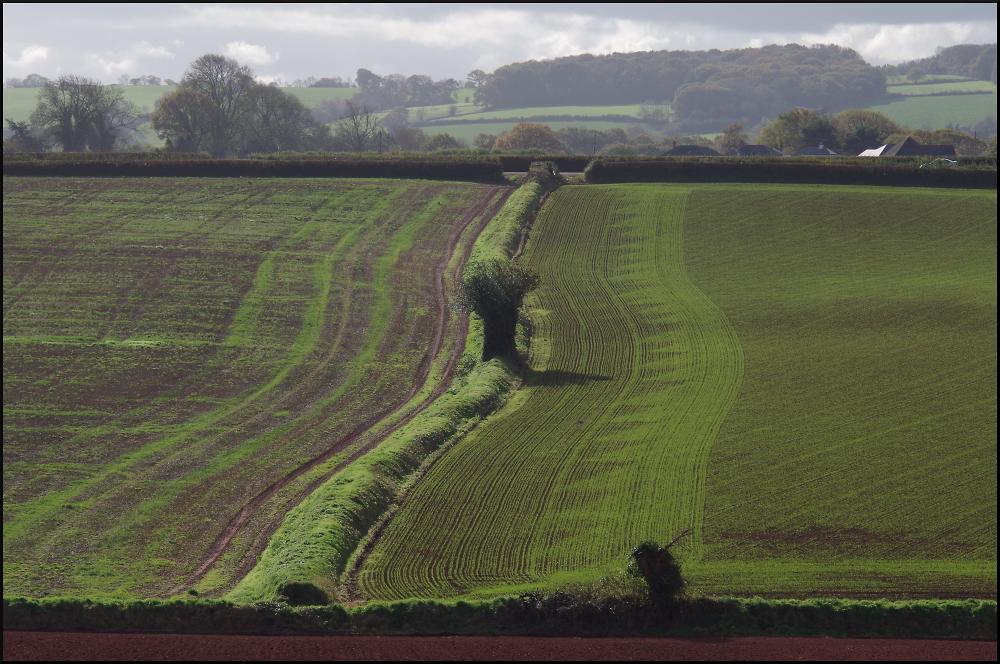 Devon Bank and fields