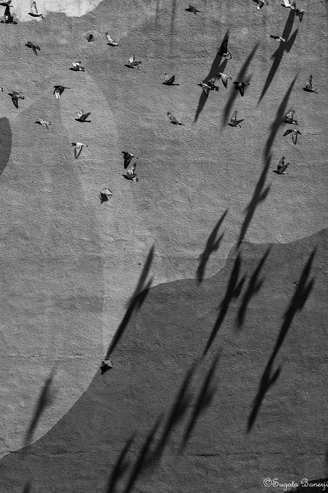 Flying Shadows