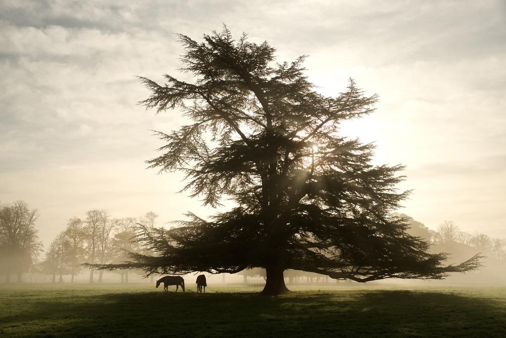 tree, mist, horses
