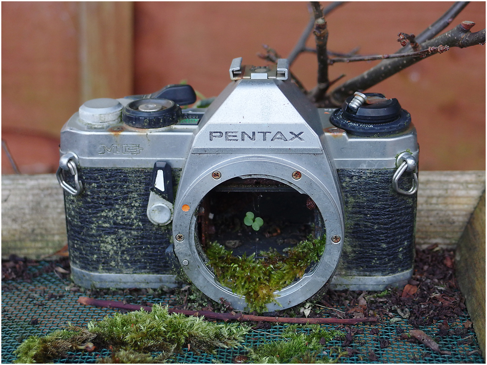 Project Decay #79 - Lucky Pentax