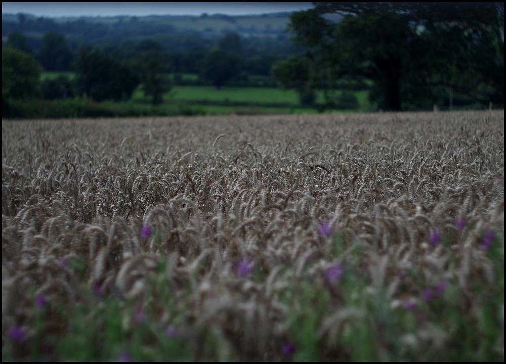 Ripe for Harvest