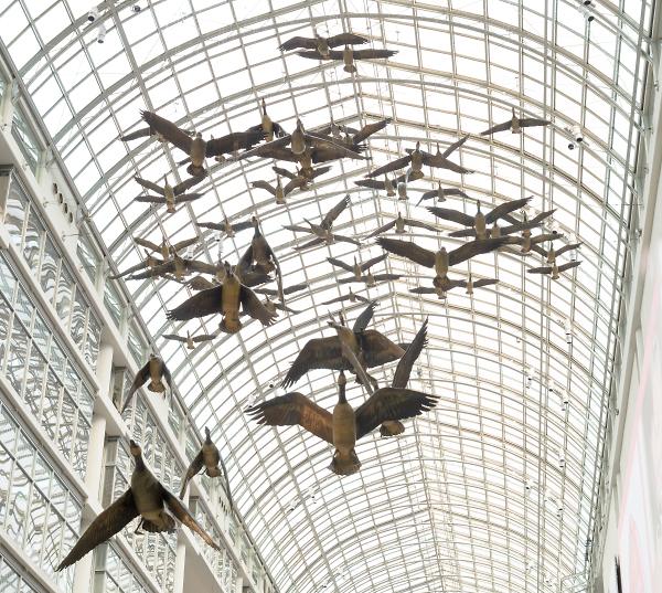 News Flash: Flock of Wild Canada Geese Invade Eaton Centre Atrium