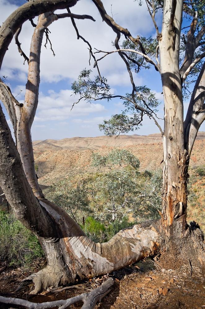 Flinders Ranges Landscape - Inspired by Hans Heysen 1877-1968