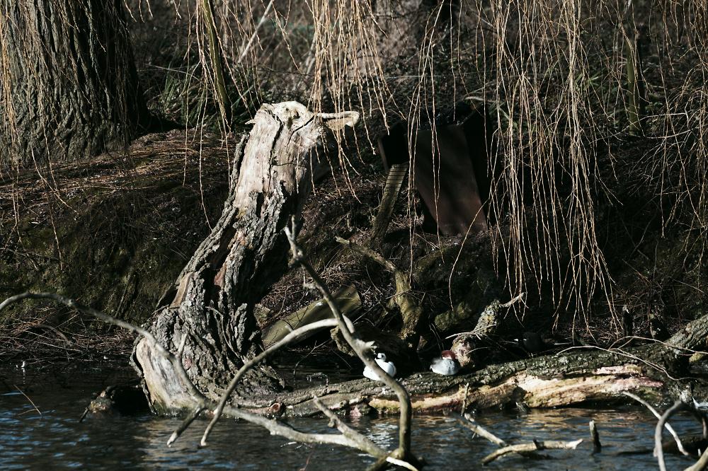 Duck Log, Slimbridge