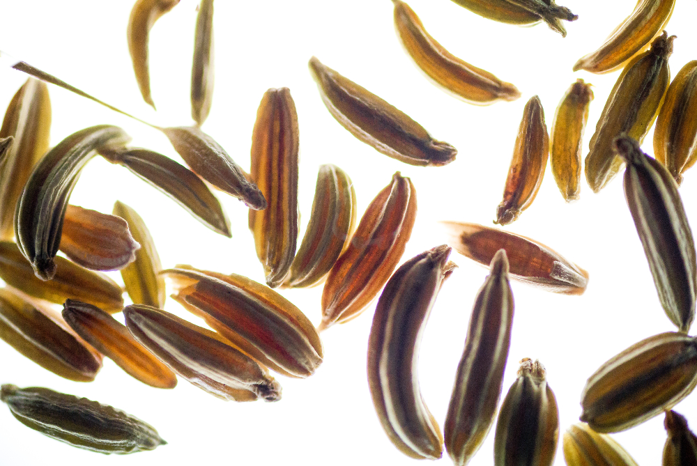 Fennel Seed 2