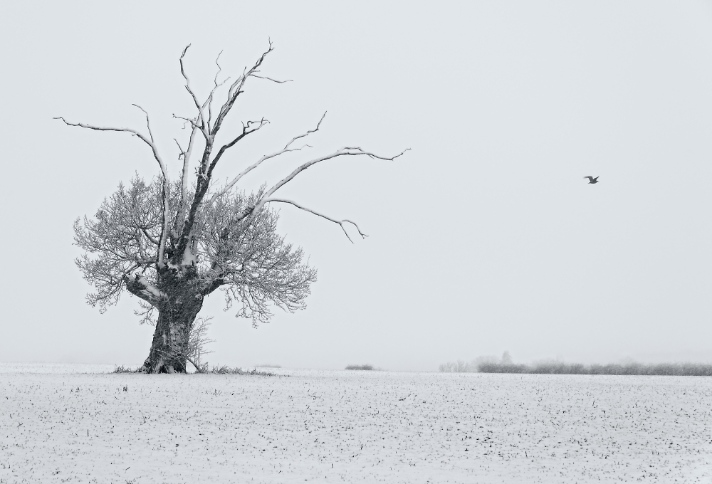 Snowy Suffolk (tinted mono)