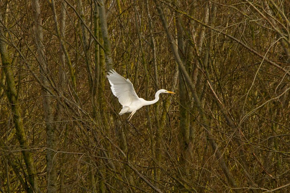 Egret Approach