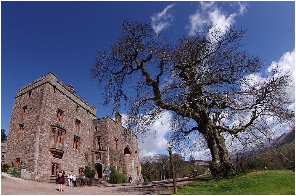 Muncaster Castle and Tree