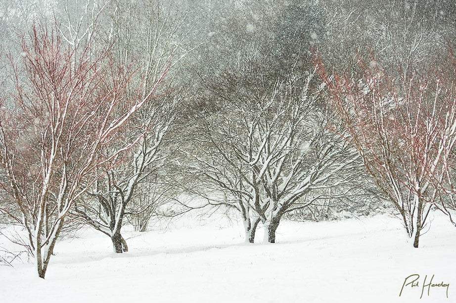 Sylvan snowfall
