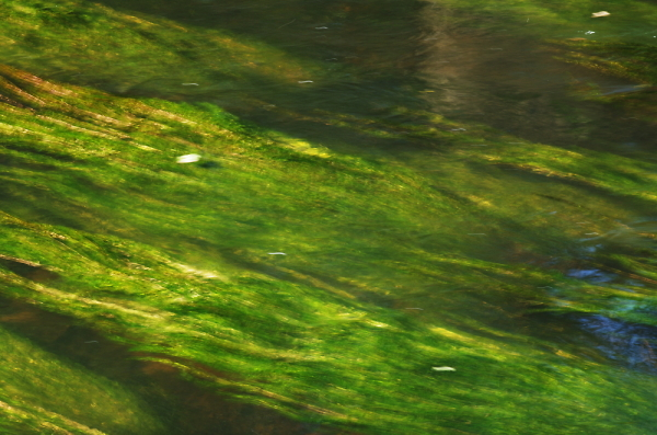 Green Bollin