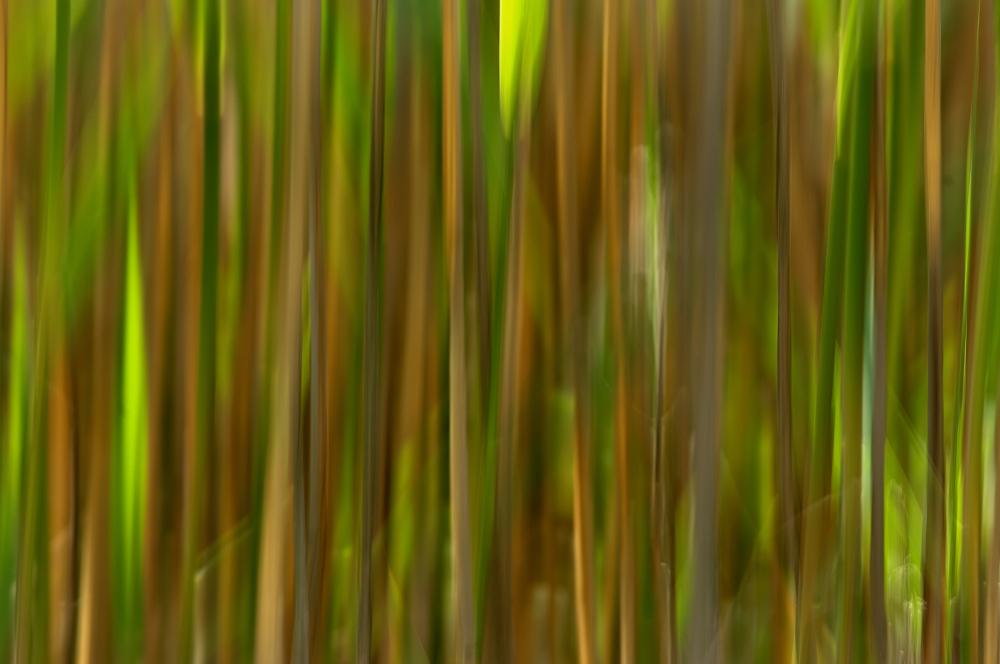 Reeds & Sunlight