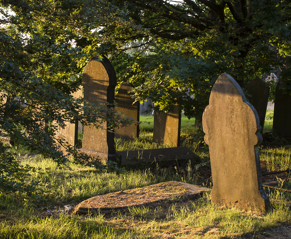 Evening sun in a disused graveyard