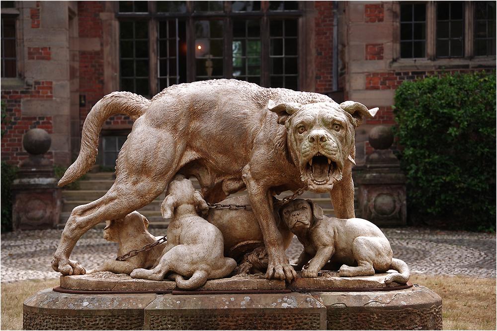 Dorfold Dogs