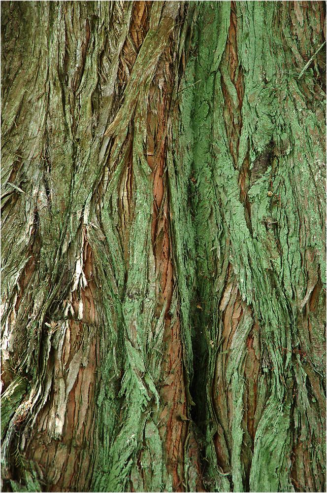 Texture in Bark