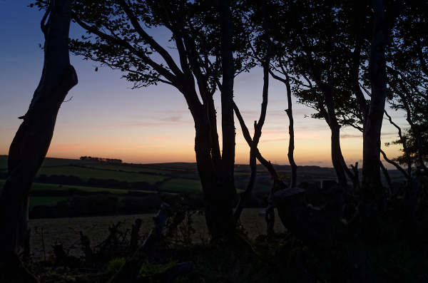 Twilight Silhouette