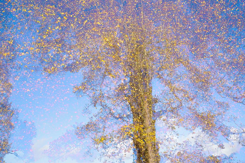 Dissonant tree