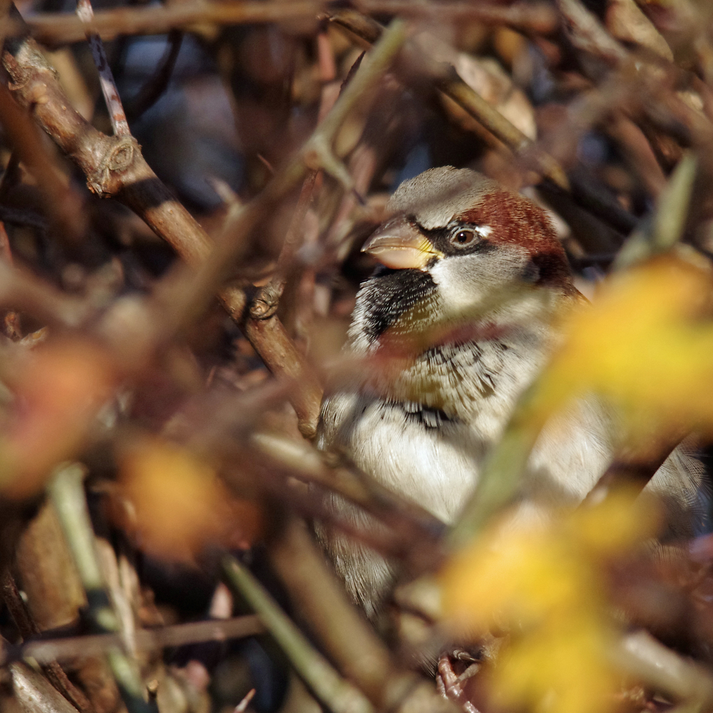 In The Hedge