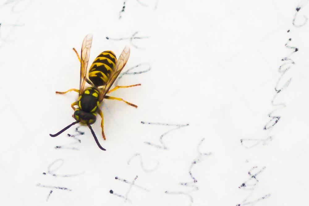 Hornet's Reading Challenge