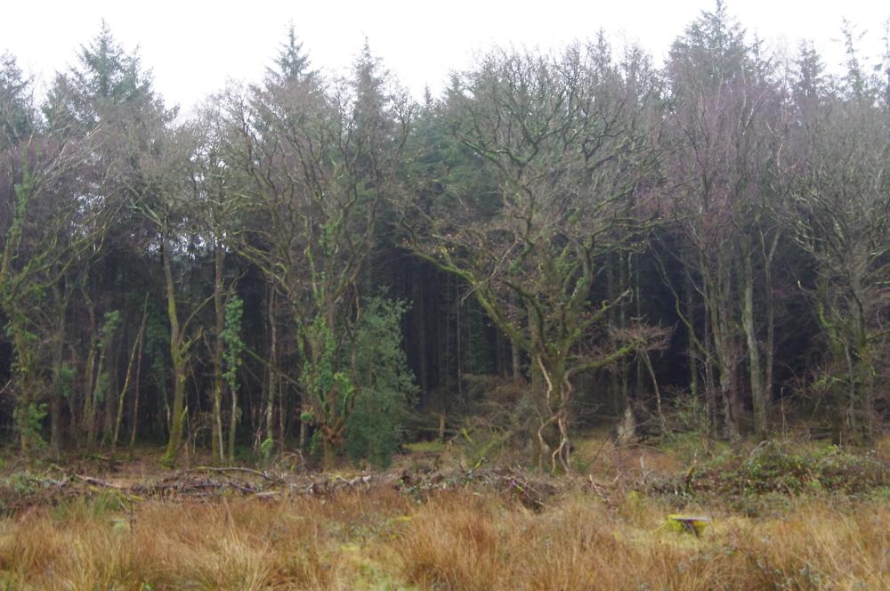 South Molton, North Devon