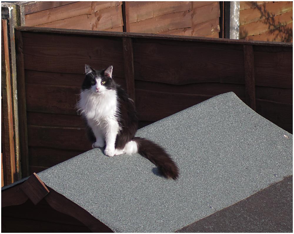 Cat on a Hot Felt Roof