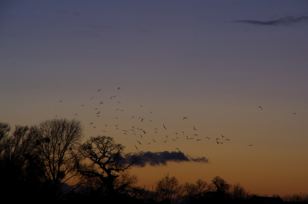 Arc of birds