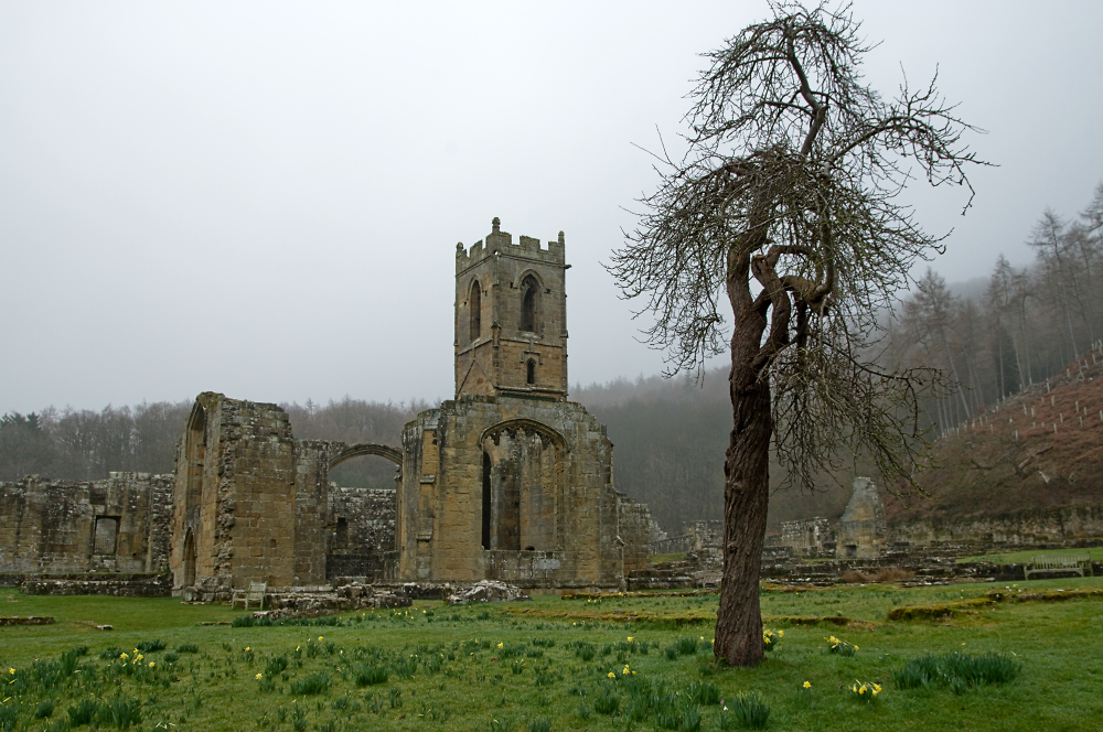 Mount Grace Priory & Tree
