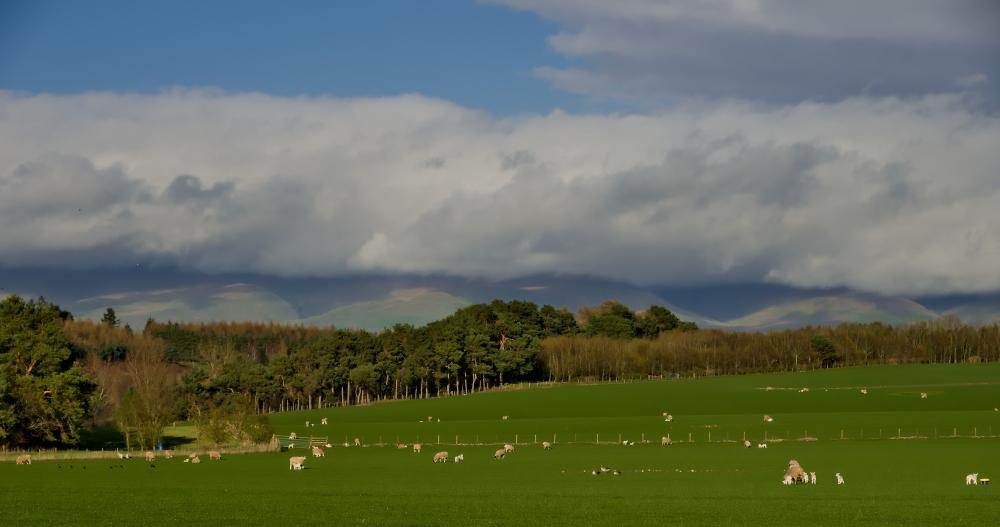Pastoral Eden Valley