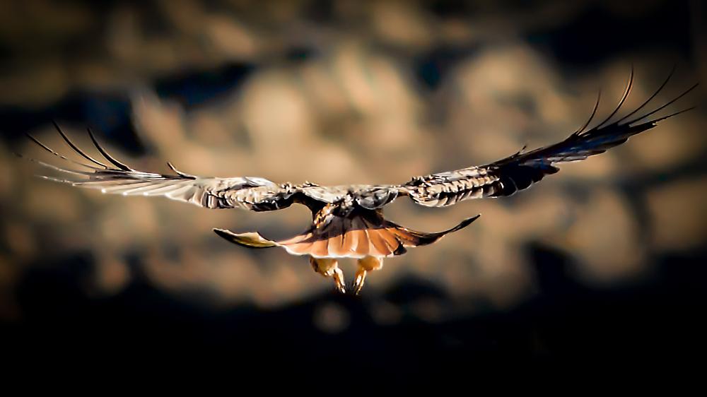 Condor Moment