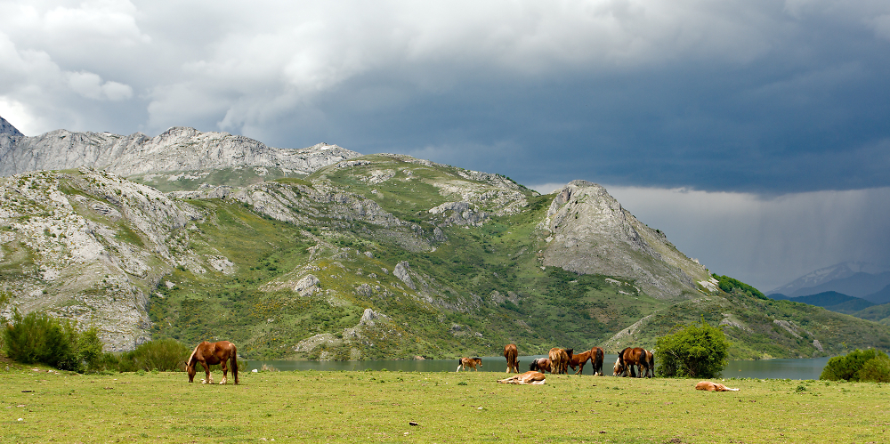 Horses in the Cantabrian Mountains