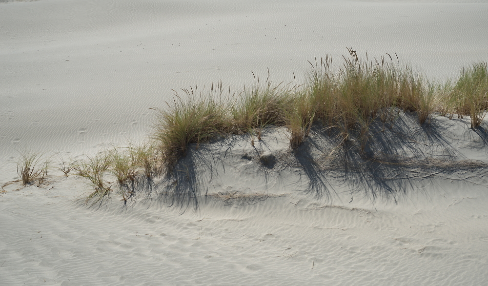 mini dune