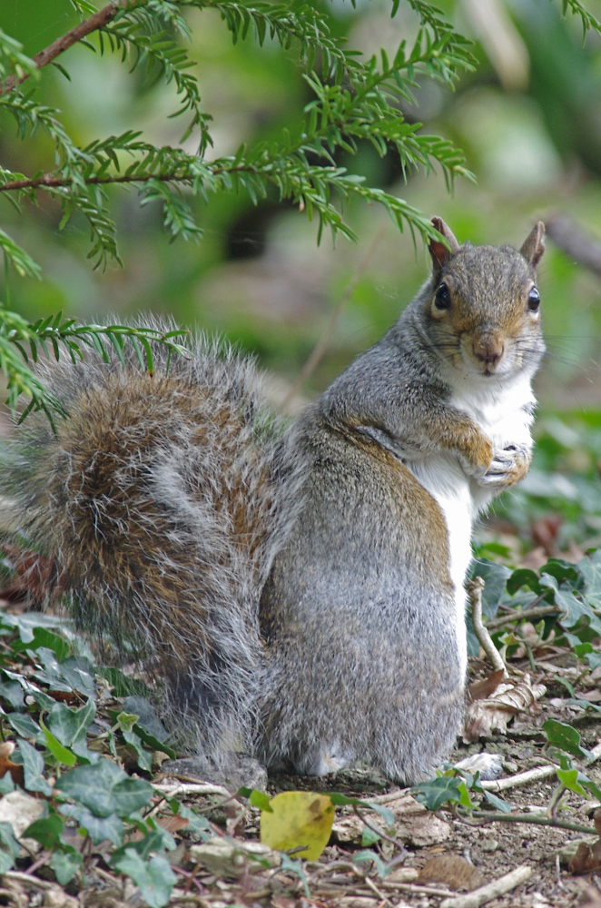 Squirrel's Double Take