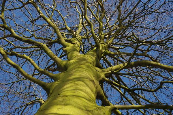 A Very Green Tree