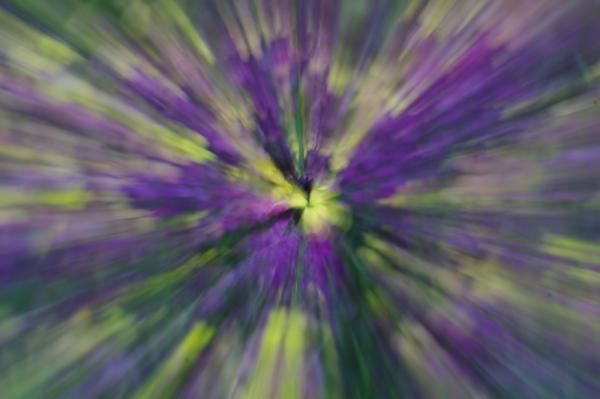 Zoom burst Wallflower