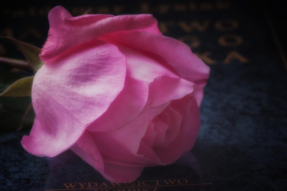 Pink poem