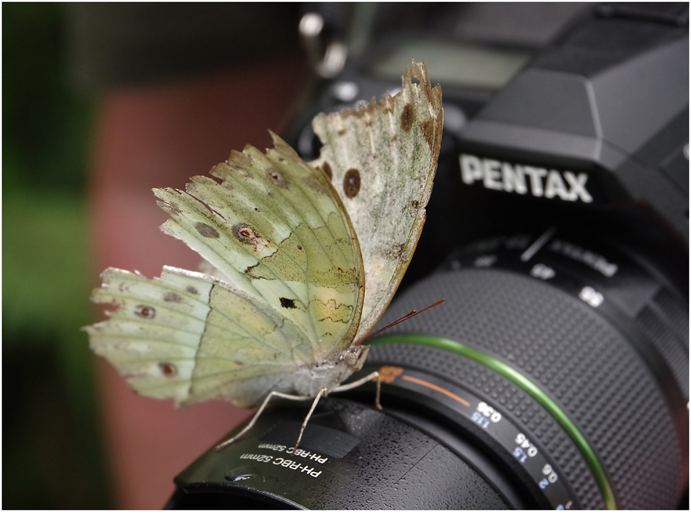 Simply Hold a Pentax