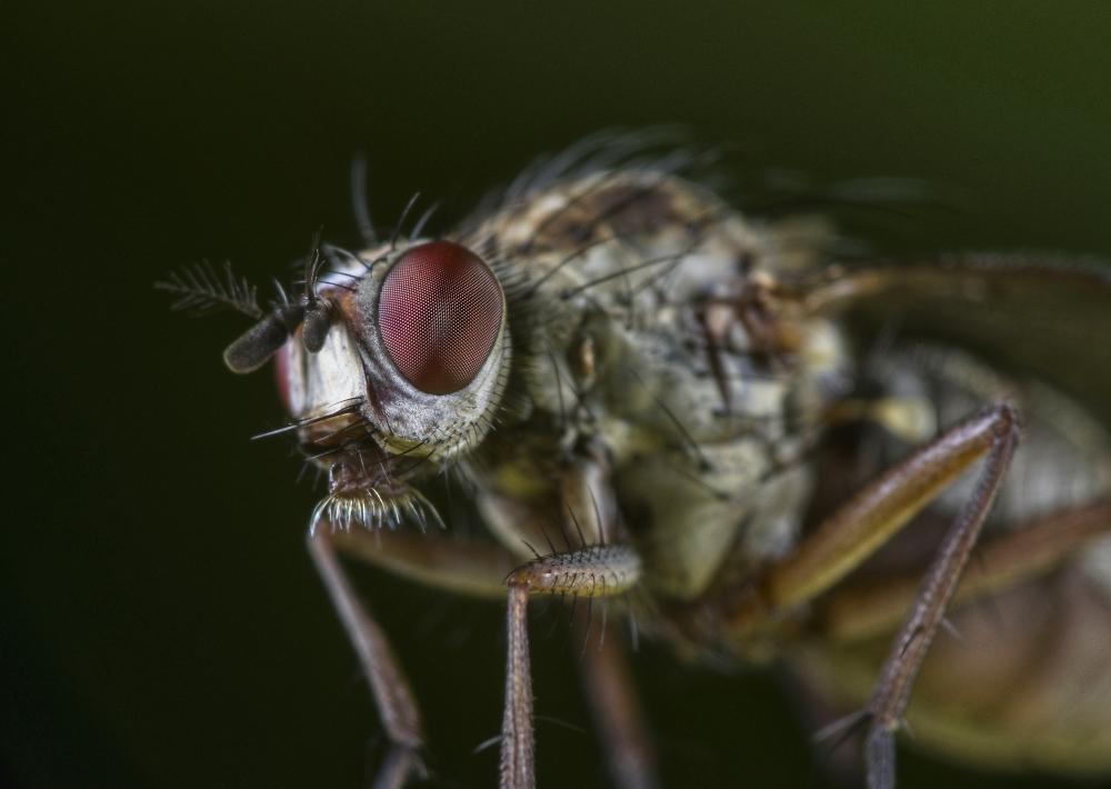 Monster fly