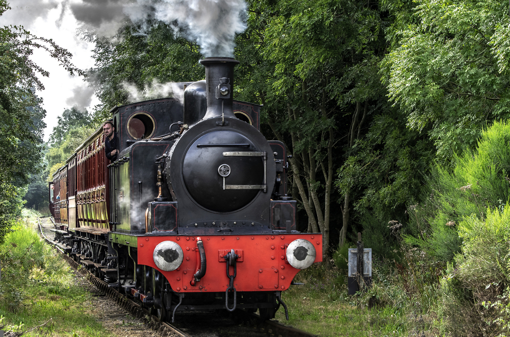 Steaming through the trees