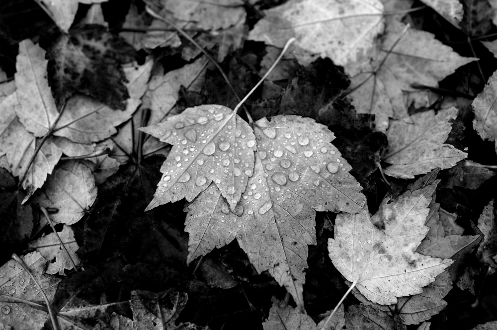 A Rainy Fall Day In October
